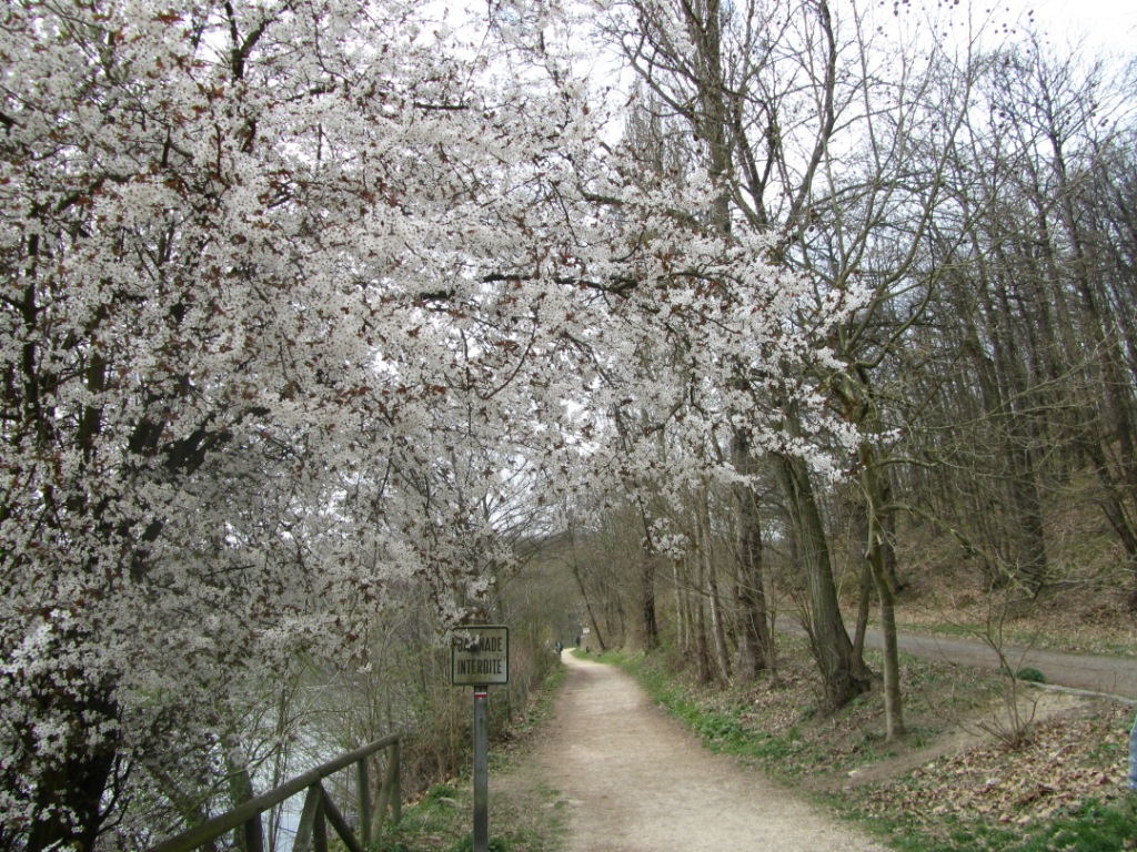 """""""flowery trail in day hiking trail in Versailles near Paris"""""""